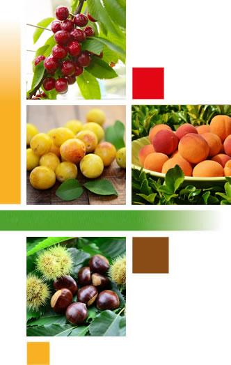 Fruits2000